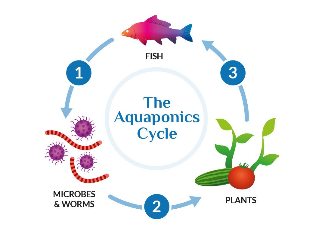 Aquaponics_03